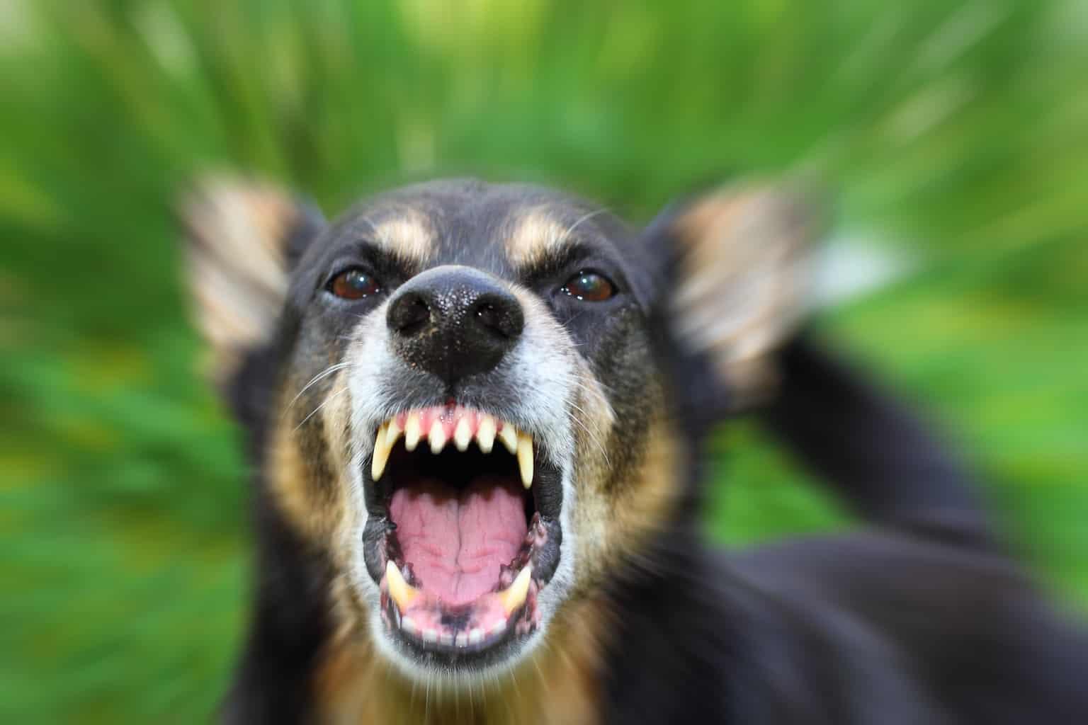 Dog training and behaviour problems