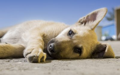 Why Social Distancing Will Help You Socialise Your Puppy