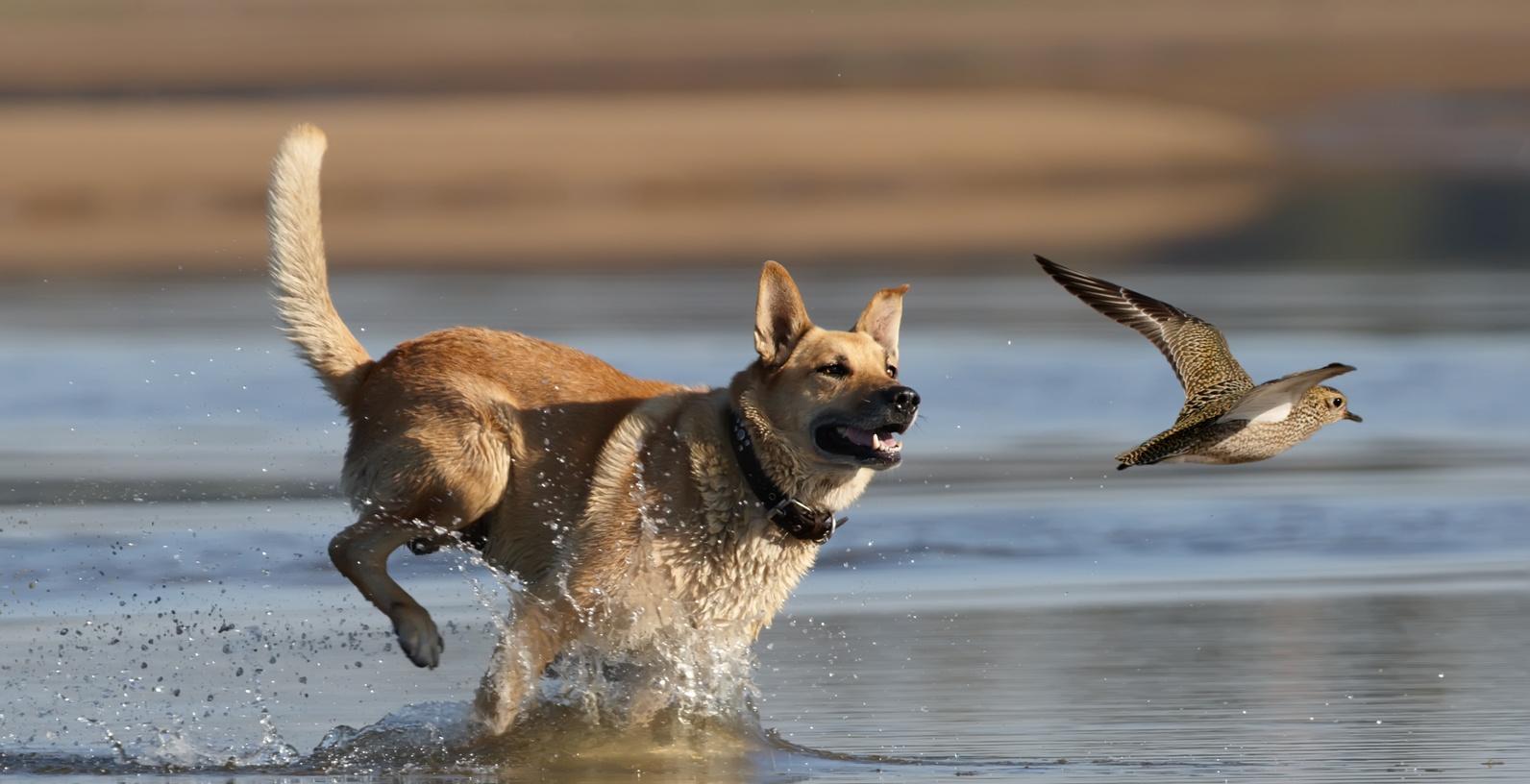 T T Bird Dog Training
