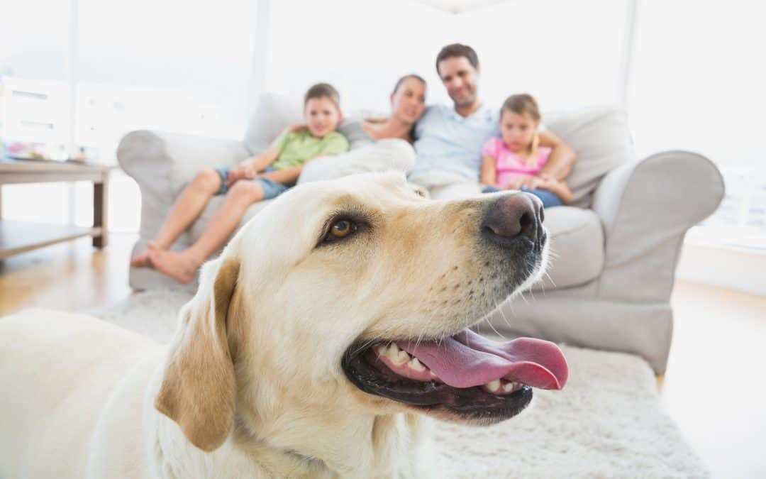 The 5 Best Places to Practise Dog Training at Home