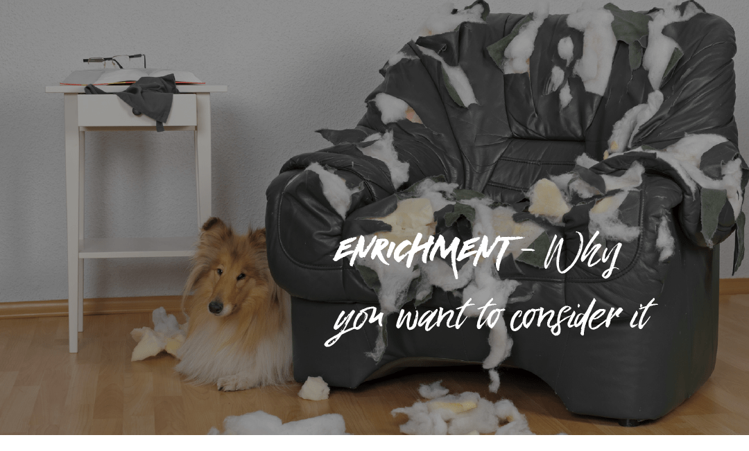 Enrichment and why you want to consider it