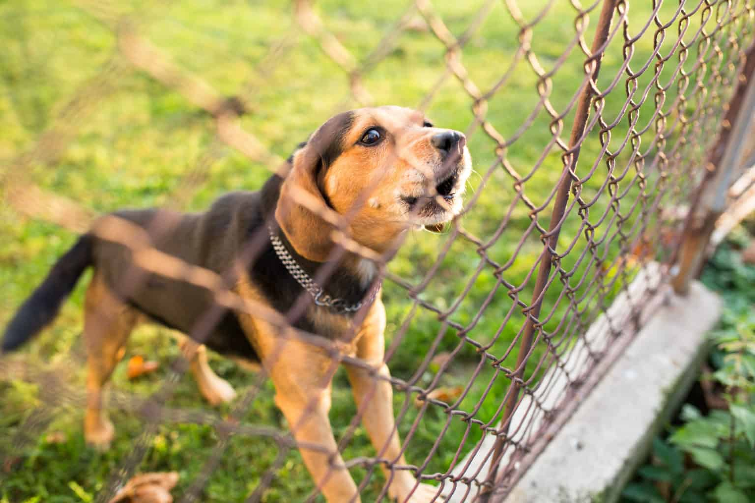 Young dog barks through the garden fence