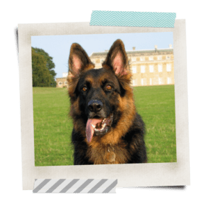 Khanu sitting in front of Petworth House