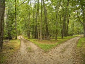 Two paths in the woods, which to choose?